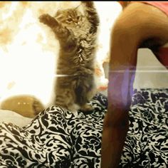 Adding Unnecessary Explosions to GIFs is Now the Only Meme Ever Worth Caring About
