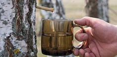 Just what is birch tree water? This tree sap is said to boost immunity, improve energy, treat joint pain and decrease cavities. Betula Pendula, Tree Cakes, Healing Herbs, Cavities, For Your Health, Moscow Mule Mugs, Natural Remedies, Jena, Hacks