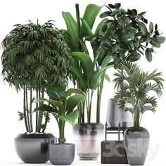 3d models: Indoor - Plant collection 291.