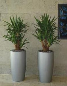 Google Image Result For  Http://www.tallplantcontainers.com/wpimages/wp0a432ea0