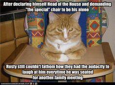 Made Me LOL Sulia Channel Cats F