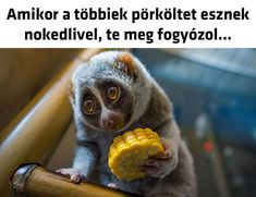 Everything Funny, Loki, Funny Jokes, Haha, Cute Animals, Memes, Bunker, Random, Pretty Animals