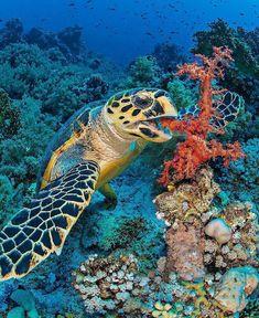 Sea Turtle meal