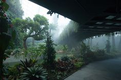 Cooled Conservatories at Gardens by the Bay  Wilkinson Eyre Architects