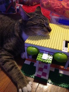 Trooper napping on LEGO