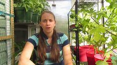 Check out how I heat my house with my greenhouse! Its so easy to do and it gives us (almost) free heat and many other benefits too. This could easily be an o...