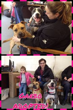 Garbo (grey & white) ADOPTED a Today! 3/20 In the picture with her and new family is her brother Bowie.