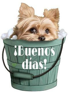 Despertando asustado jajajajaja Good Morning Dog, Good Morning In Spanish, Good Morning Prayer, Good Morning Messages, Morning Prayers, Morning Images, Happy Day Quotes, Hug Quotes, Good Day Quotes