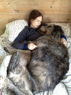 Irish Wolfhounds all think they are very small and *love* to cuddle.
