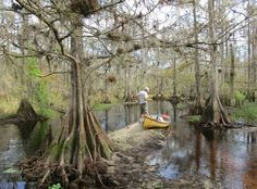 Legendary Fisheating Creek : Kayak trail lives up to hype, but timing is everything