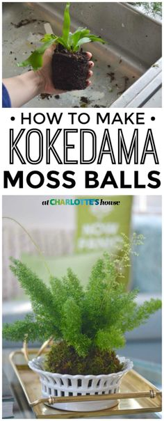 DIY Kokedama Moss Balls Make these adorable kokedama moss balls with two simple ingredients. I love these for spring and have already made 5 of them! Inside Plants, Moss, Kokedama, Chicken Garden, Hanging Plants, Moss Garden, Moss Balls, Planting Flowers, Moss Planter