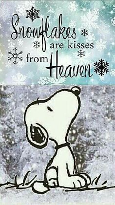 Snoopy - Snowflakes are kisses from heaven Snoopy Love, Charlie Brown And Snoopy, Snoopy And Woodstock, Charlie Brown Quotes, Peanuts Quotes, Snoopy Quotes, Phrase Cute, Funny Quotes, Life Quotes