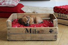 Personalised Wooden Crate Small Dog Bed.....too freak'n cute!!