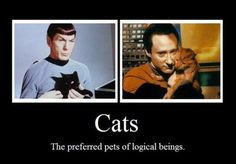 Star Trek Cats...you can't argue with Spock or Data~Well, that makes sense, I prefer cats.