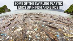 Most garbage floating in the ocean gathers in these 5 giant patches????