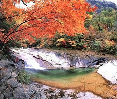 Seoraksan in Autumn, Sokcho, Korea: In the fall, the roads leading to the mountains become especially busy. Korea's best autumn travel destinations are the mountains colored with autumn foliage ('danpoong' in Korean). The skies turn cobalt blue and the leaves a deep crimson color creating a beautiful contrast.