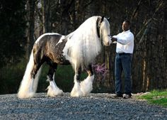 This is Austin with his trainer, Bruce Griffin.  Photo by Cally Matherly, callyspictures.com, USA
