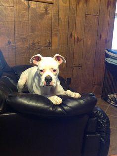 My sweet boy Casper.  Love this boy!