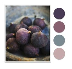 Color Pallet: Bowl of Figs