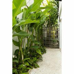 O corredor lateral que dá acesso à casa ganhou um canteiro tropical com…