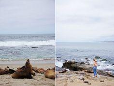 San Diego Sea Lions in La Jolla Cove