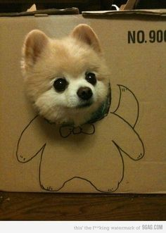 Why is it so CUTE for an animal to stick its head through a hole in cardboard?