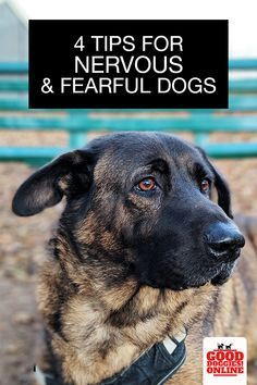 Fearful Dog Training Enrichment For Fearful Dogs Dog Training