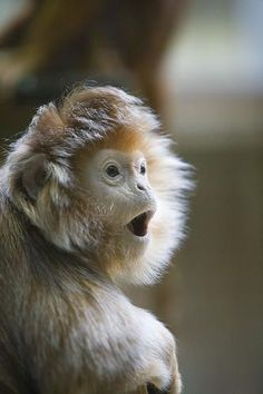 a surprised monkey