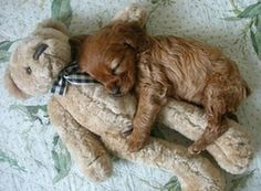 Cute puppies caught in adorable sleepingpositions