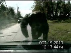 the clearest images of terrifying bigfoot ever!! you should see - YouTube