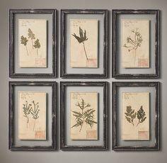 19th C. Framed Herbariums Black (Set of 6)