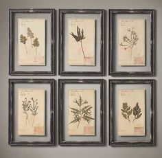 19th C. Framed Herbariums