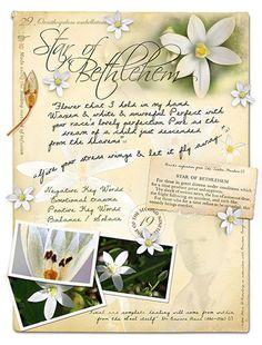 Agrimony Bach Flower Remedy for Inner Turmoil and Stress Stock Bottles