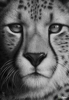 DIY Diamonds Embroidery Animal Lion full Round Diamond Painting Cross Stitch Kits Home decor Decoration Maison Amazing Drawings, Realistic Drawings, Cool Drawings, Amazing Art, Animal Drawings, Pencil Drawings, Animal Paintings, Animals Beautiful, Cute Animals