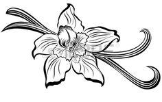 Vanilla pods and flower  Stock Vector