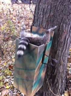 Raccoon box Predator Hunting, Coyote Hunting, Archery Hunting, Deer Hunting, Camping Survival, Outdoor Survival, Survival Skills, Survival Guide, Hog Trap