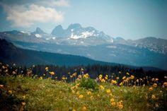 Big Horn Mountains near Sheridan, Wyoming