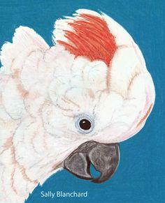 Sally Blanchard - Prismacolor Pencil Drawing Moluccan Cockatoo Head
