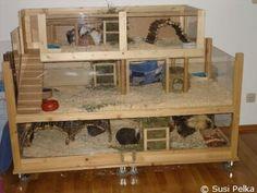 meerschweinchenberatung.at: Beispiel 2 für Eigenbauten (Doppelstockbauweise)