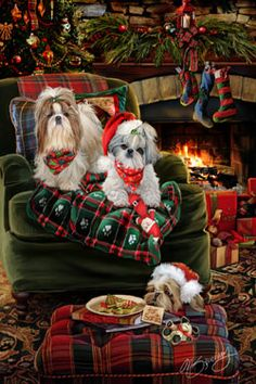 """New for 2014! Shih Tzu Christmas Holiday Cards are 8 1/2"""" x 5 1/2"""" and come in packages of 12 cards. One design per package. All designs include envelopes, your personal message, and choice of greeting.Select the inside greeting of your choice from the menu below.Add your custom personal message to the Comments box during checkout."""