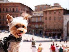 Luca touring Siena.