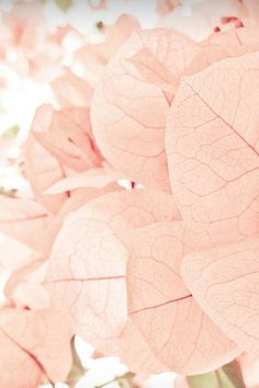 Praise Wedding » Wedding Inspiration and Planning » Sweet Pink Wedding Palette