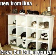Crazy Cat Ladies Rejoice...its quite possible this may be me someday, lol!