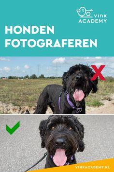 Vermijd hard zonlicht bij het fotograferen van je hond Dog Photography, Dog Cat, Photoshop, Cairns, Canon Eos, Pictures, Dogs, Animals, Photos