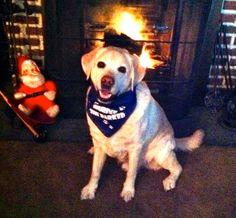 Daniel!  kristadavis.com Labrador Retriever, Dog Cat, Pets, Street, Animals, Labrador Retrievers, Animaux, Animales, Roads