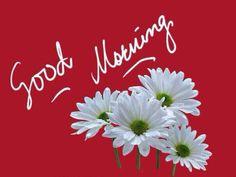 Good Morning Good Morning Beautiful Flowers, Good Morning Roses, Good Morning Images Flowers, Good Morning Cards, Good Morning Beautiful Images, Good Morning Texts, Good Morning Greetings, Good Morning Good Night, Morning Pictures