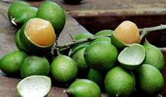 Mamoncillos fruta para comer ácida y deliciosa.