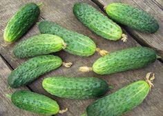 Хочу поделится своим опытом выращивания огурцов.  Суть метода в том, огурцы выращиваются в мешках. Берем мешки из плотного полиэтилена, объемом где-то 70 литров и насыпаем в них слой