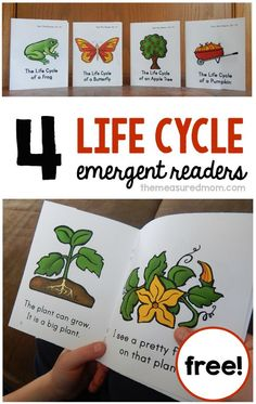 Life Cycles - 4 new sight word books These FREE emergent readers are perfect to use with your life cycle unit! They'll have your students reading about the life cycle of a butterfly, frog, pumpkin, and apple tree. Kindergarten Science, Kindergarten Reading, Science Classroom, Teaching Science, Science Activities, Teaching Reading, Reading Activities, Learning, Sequencing Activities