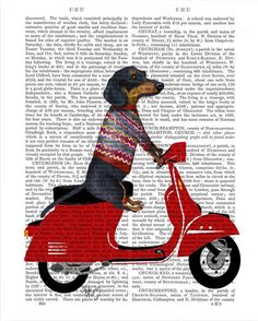 Dachshund on a Moped Canvas Print